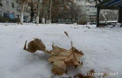 Эпидемия гриппа не началась, а в Ташкенте уже нет антивирусных лекарств