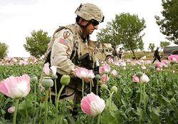 Наркотики: спецслужбы России и США провели операцию в Афганистане