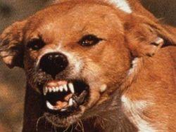 Бешеного пса, искусавшего 43 полтавчан, наконец нейтрализовали