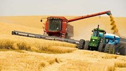 Российский урожай зерна 2012 года составит 71,7 млн. тонн