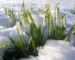 Весна в Европейской части РФ начнется в последнее воскресенье марта