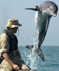 Украина займется подготовкой боевых дельфинов