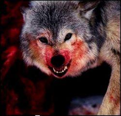 Волчица накинулась на сотрудницу Киевского зоопарка