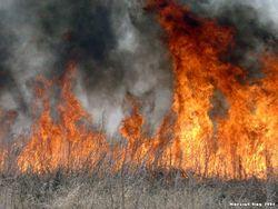 МЧС Украины предупреждает о повышенной пожароопасности