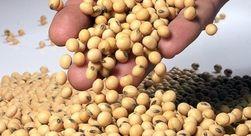 Урожай сои на Украине планируют в объёме 2,3 млн. тонн