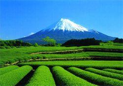 В июле  индекс промышленного производства  Японии  вырос на 1.4 %