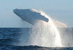 Океанологи из США и Канады нашли кита, способного говорить