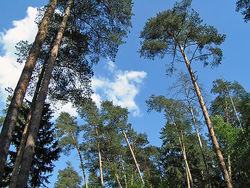 Экологи полагают, что земли Цаговского леса сдавались в аренду с 2006 г