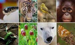 Чтобы сохранить биоразноообразие на Земле, нужны миллиарды ежегодно