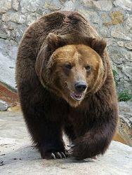 В Калифорнии рейнджер вызволил медвежонка из мусорного бака