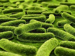 """Ученые выявили самый опасный """"супермикроб"""" на Земле"""