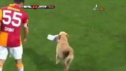 ТОП видео YouTube: как щенки футбольный матч остановили