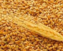 В сентябре испанский импорт пшеницы сократился на 38 процентов