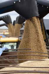 Собрав 7 млн. тонн зерновых, Беларусь обогнала Россию и Украину