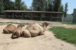 Радио «Озодлик»: директор ташкентского зоопарка полгода находится под следствием