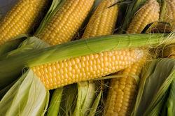 МСХ США подняло прогноз на производство кукурузы на 2,1 млн. тонн