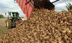 Более 2,3 млн. тонн сахарной свеклы было убрано белорусскими аграриями
