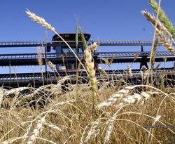 Украинский агросектор может стать для страны локомотивом