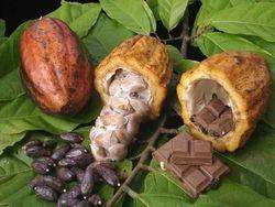 Эксперты: основным драйвером цен на какао выступает погода