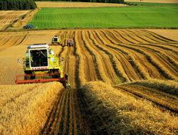 Какие регионы Украины собрали наибольший урожай зерновых