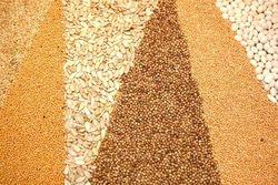 Кукуруза сбавила темп роста, а соя пошла на понижение