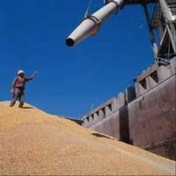 производители зерна