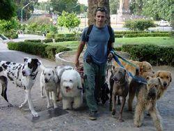 Украинские чиновники будут штрафовать за собачьи фекалии на улицах