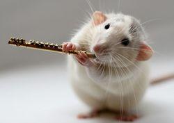 В Минске выбрали самых лучших хомяков и крыс