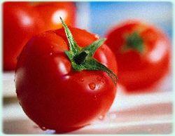 Испанцы хотели накормить Украину опасными помидорами