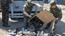В НАТО обещали помочь Украине в уничижении старых боеприпасов