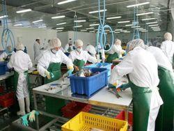 Алтайские предприятия пищевой промышленности получают господдержку