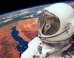 Facebook иронизирует над иранским космонавтом-обезьяной. А зря