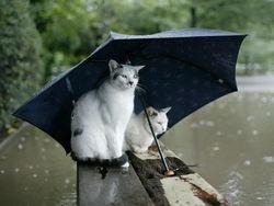 Погода в Украине: Украину ждут дождливые дни с грозой