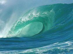 Ученые ищут источники пополнения кальция в Мировом океане