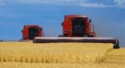 Австралийский прогноз на урожай пшеницы в октябре был снижен