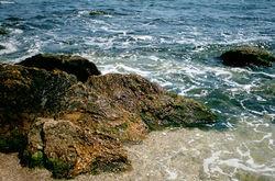 В Черное море плывут около ста тонн фекалий