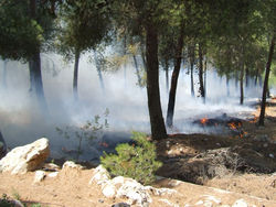 Сотни пожарных тушат крымский заповедник
