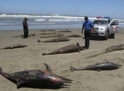 Ученые не могут определить причин массового мора дельфинов в США