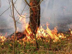 В нескольких районах Хабаровского края ввели особый противопожарный режим