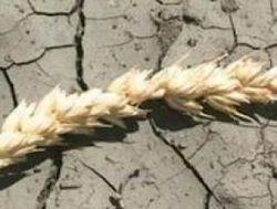 Засуха ударила по экономике Крыма – ущерб уже превысил 370 млн. гривен