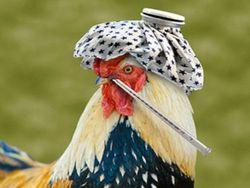 Птичий грипп H7N9 передается воздушно-капельным путем – ученые