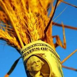 Будут ли расти цены на рынке пшеницы - трейдеры