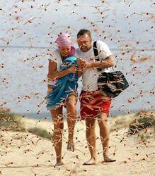 Популярные курорты Египта на Красном море атакуют полчища саранчи