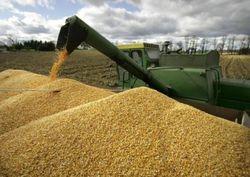 Вчера было зафиксировано падение котировок пшеницы