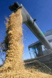 Импорт пшеницы ЕС может превысить 6 млн. тонн