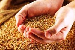 Аграрии опасаются распродавать собранный урожай