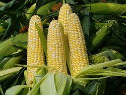 Запасы кукурузы в США достигнут рекордного объёма в текущем МГ