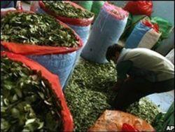ООН: США борется с Колумбией, а производство коки растет в Перу