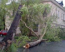 Ураган в Закарпатье разрушил дома, сломал деревья, оставил людей без света