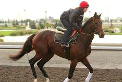 Конь Рамзана Кадырова выиграл 200 тыс. долларов на скачках в Дубаи